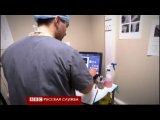 Коту по кличке Оскар, которому отрезало задние ноги комбайном, вживили протезы